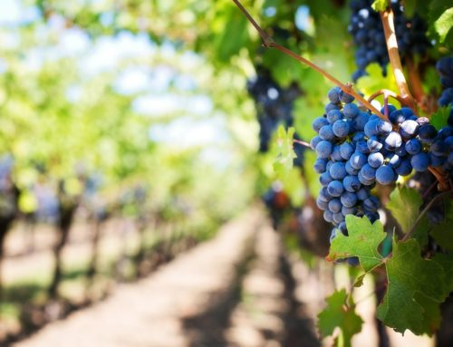 VINES, WINES AND FOOD IN ANDALUSIA
